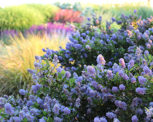 9 Favorite Flowering Shrubs For Spring And Summer New Hampshire