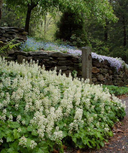 Top 10 Native Plants For The Northeast New Hampshire Home Magazine